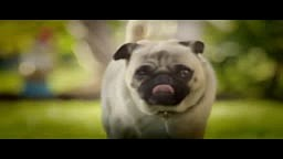 DORITOS® - Pug Attack -- Crash the Super Bowl 2011 Finalist