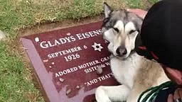 Dog Mourns at the Grave of a Loved One