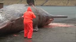 Whale EXPLODES While being Cleaned by Worker