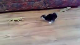 LOL Cat vs Lizard