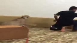 Guy gets Pushed into CHAINED TIGER ALMOST gets ATTACKED