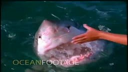 Would you DEAR to Play with a Shark like this?