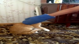 Never Annoy a Cat, He Will Seek Revenge Wait for the end