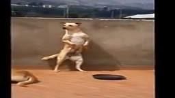 Dog Dances to El Serrucho