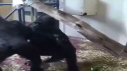 Two animals start having SEX in front of Everybody at the Zoo