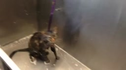LMAO! WATCH Who Knew Cats Could Talk (No More Bath Time)