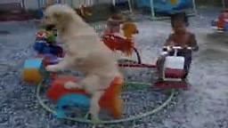 Cute Dog Rides Ferris Wheel with the kids