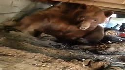 MAN VS. BEAR! Watch how DISRESPECTFUL This Bear Is ....