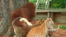 If different animals can get along why cant we?