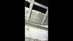 Video thumb #8