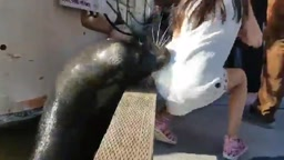 Sea Lion pulls young girl into DIRTY WATER