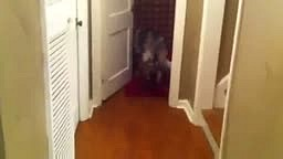Dog Runs Into Room And Shuts Door after Parent Disciplines D