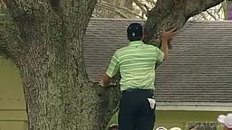 Sergio Garcia HITS AMAZING golf ball from tree SHOT