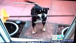 Dog with Rake trying to enter a Door